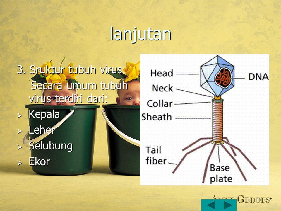 lanjutan 3. Sruktur tubuh virus Secara umum tubuh virus terdiri dari:
