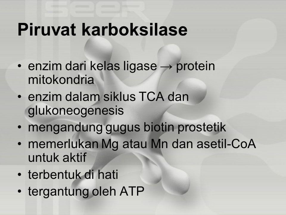 Piruvat karboksilase enzim dari kelas ligase → protein mitokondria