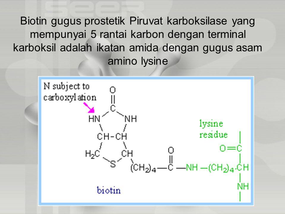 Biotin gugus prostetik Piruvat karboksilase yang mempunyai 5 rantai karbon dengan terminal karboksil adalah ikatan amida dengan gugus asam amino lysine