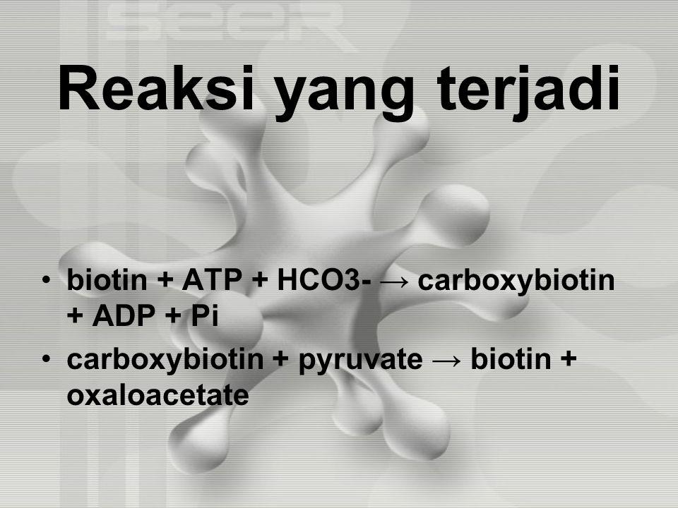 Reaksi yang terjadi biotin + ATP + HCO3- → carboxybiotin + ADP + Pi