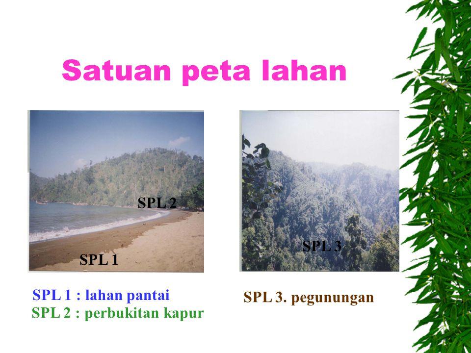 Satuan peta lahan SPL 2 SPL 3 SPL 1 SPL 1 : lahan pantai