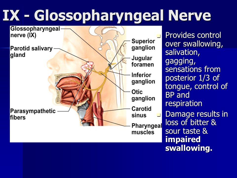 IX - Glossopharyngeal Nerve