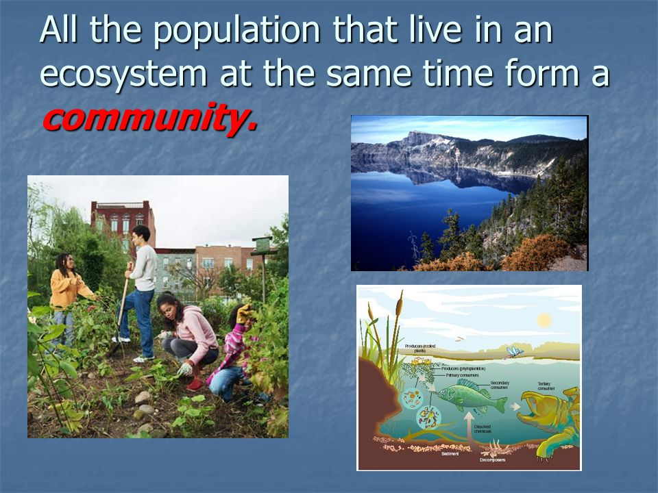 All the population that live in an ecosystem at the same time form a community.