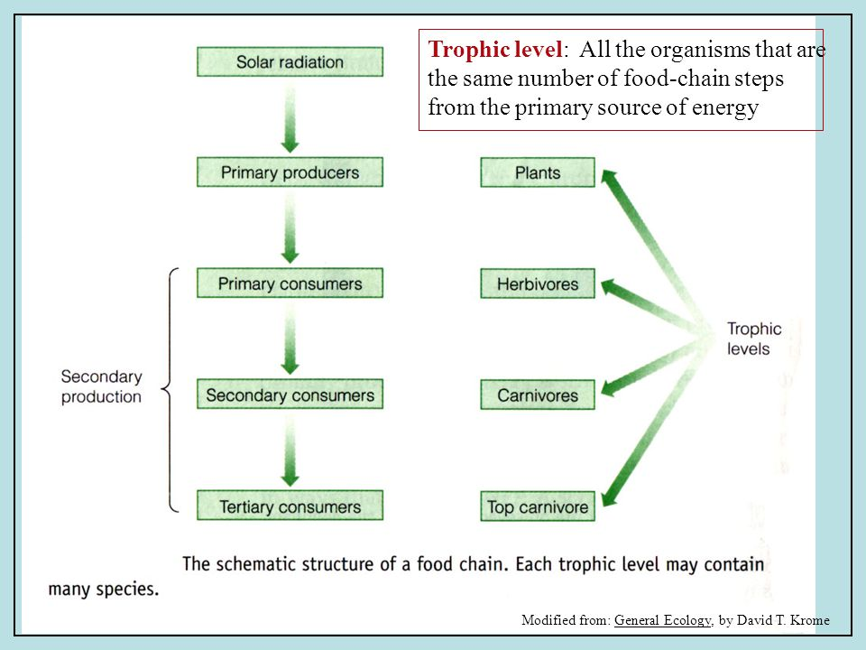 Trophic level: All the organisms that are the same number of food-chain steps from the primary source of energy