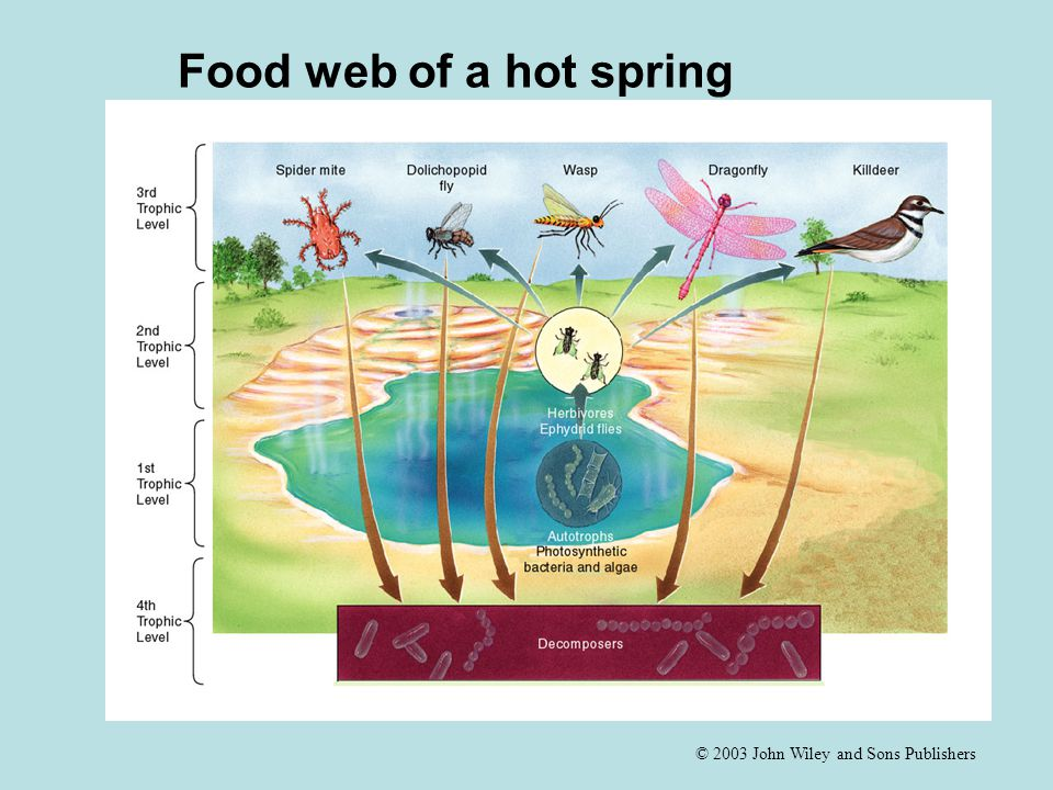 Food web of a hot spring Fig 6.2 Food web of a hot spring.