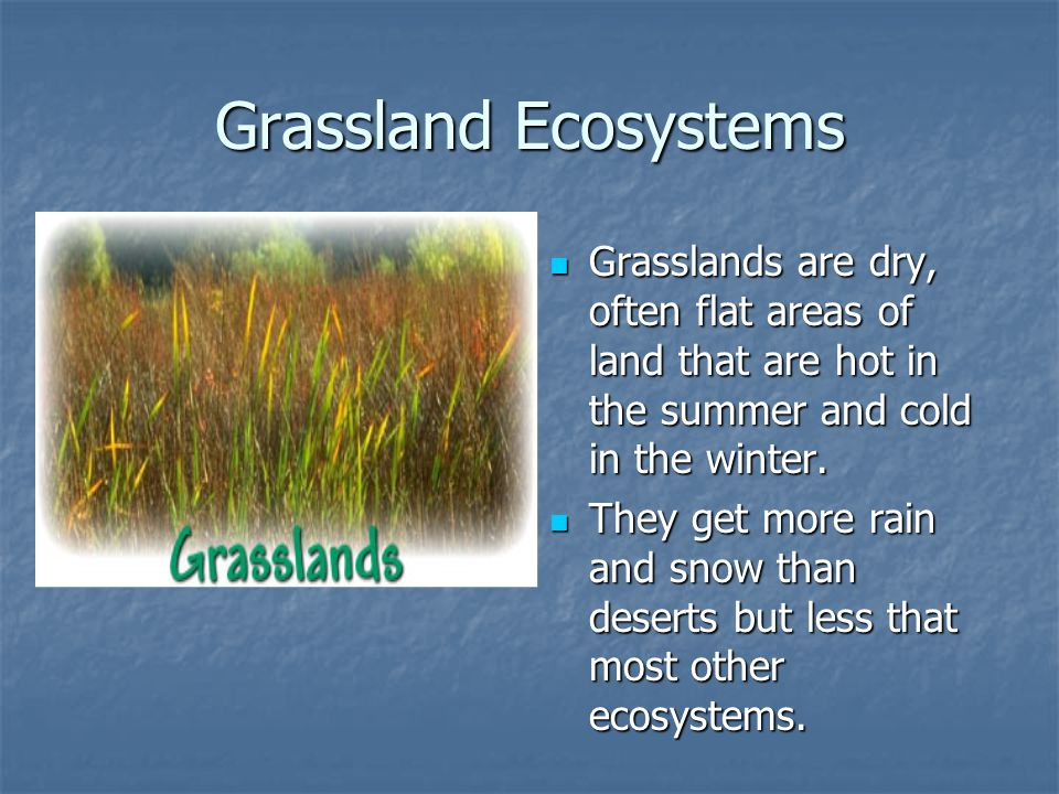 Grassland Ecosystems Grasslands are dry, often flat areas of land that are hot in the summer and cold in the winter.