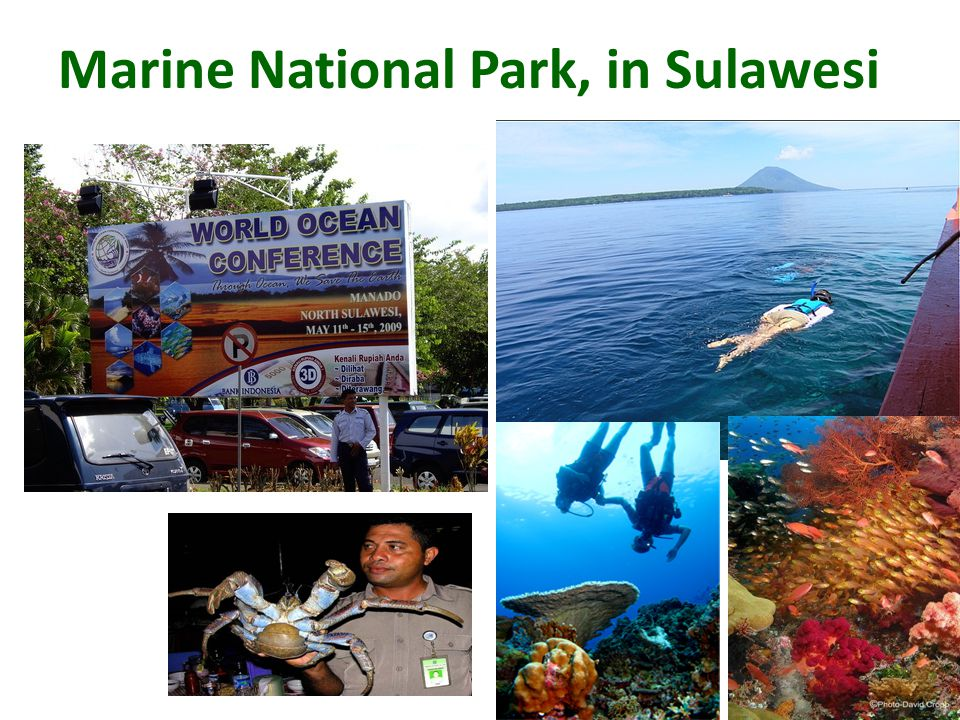 Marine National Park, in Sulawesi