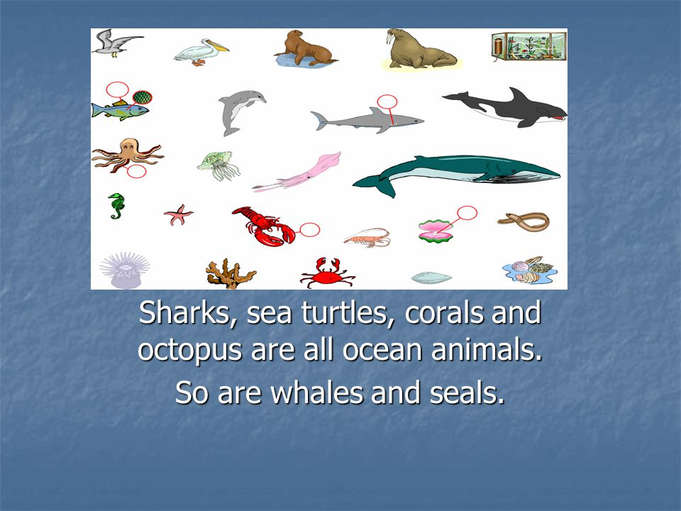 Sharks, sea turtles, corals and octopus are all ocean animals.