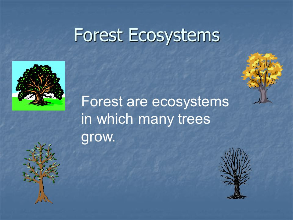 Forest Ecosystems Forest are ecosystems in which many trees grow.