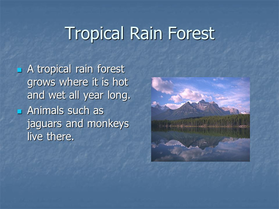 Tropical Rain Forest A tropical rain forest grows where it is hot and wet all year long.