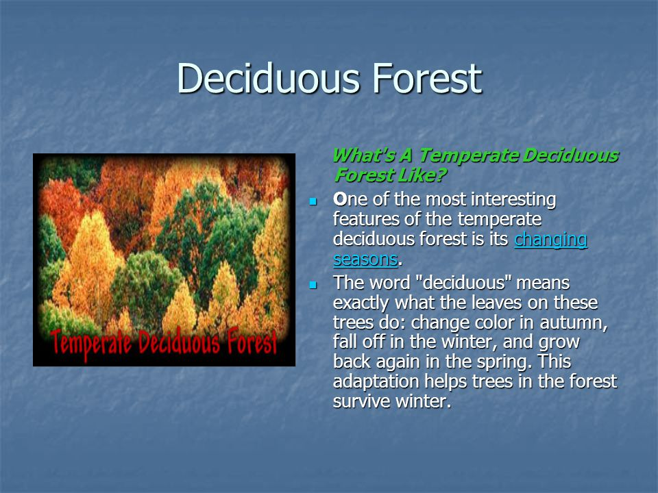Deciduous Forest What s A Temperate Deciduous Forest Like
