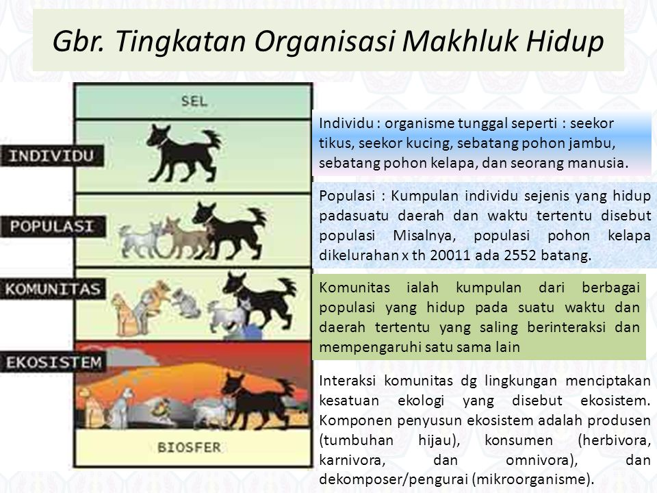 Gbr. Tingkatan Organisasi Makhluk Hidup