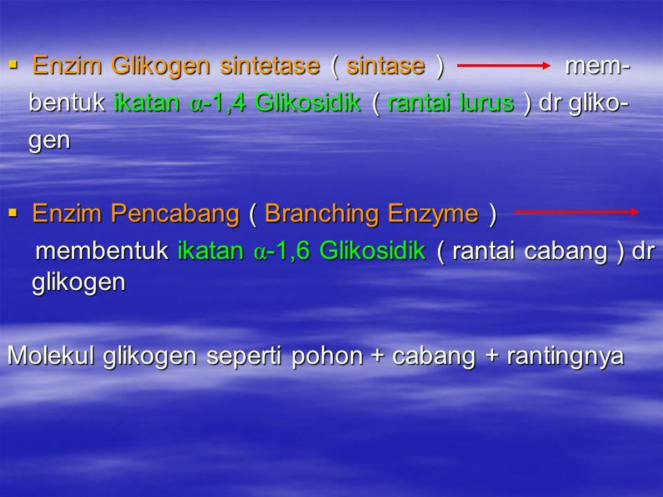 Enzim Glikogen sintetase ( sintase ) mem-