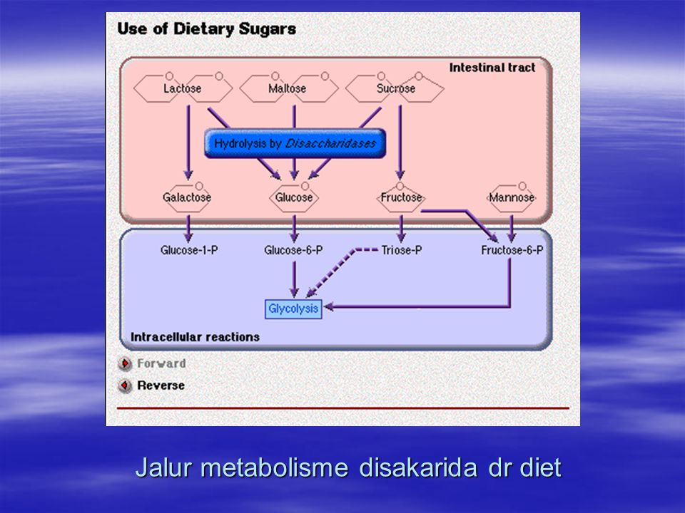 Jalur metabolisme disakarida dr diet