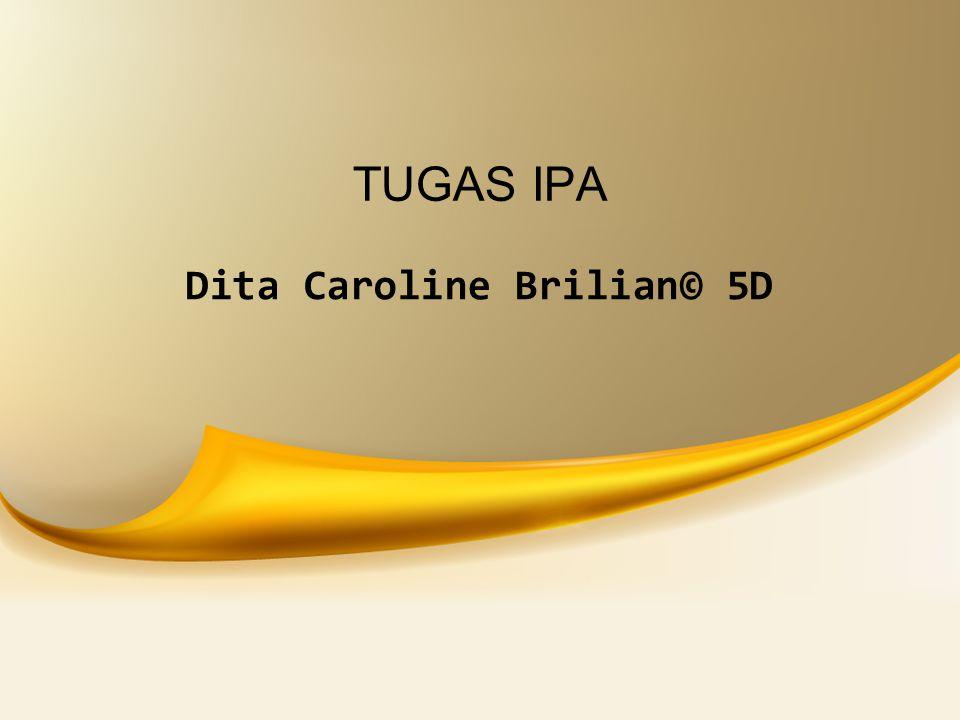 Dita Caroline Brilian© 5D