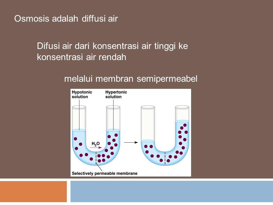 Osmosis adalah diffusi air