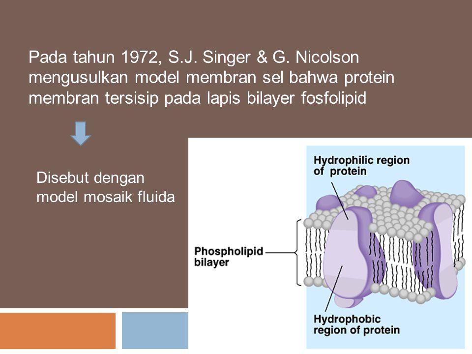 Pada tahun 1972, S.J. Singer & G. Nicolson mengusulkan model membran sel bahwa protein membran tersisip pada lapis bilayer fosfolipid