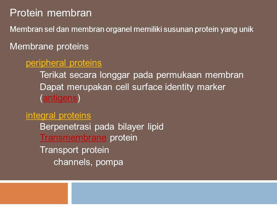 Protein membran Membrane proteins peripheral proteins