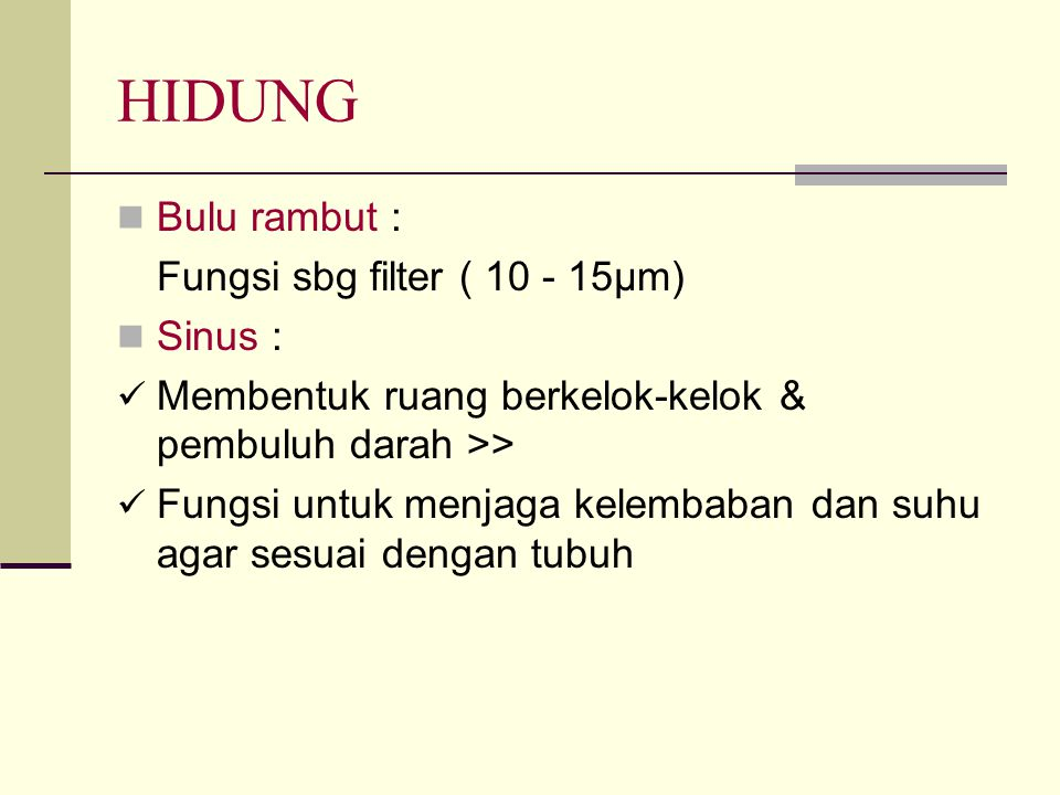 HIDUNG Bulu rambut : Fungsi sbg filter ( 10 - 15µm) Sinus :