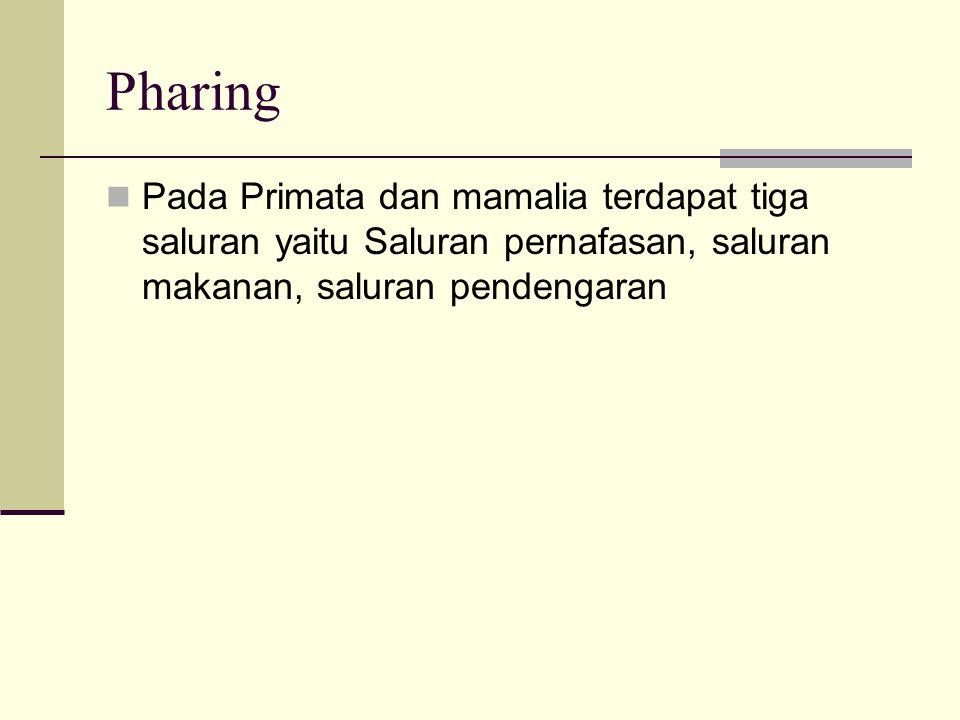 Pharing Pada Primata dan mamalia terdapat tiga saluran yaitu Saluran pernafasan, saluran makanan, saluran pendengaran.