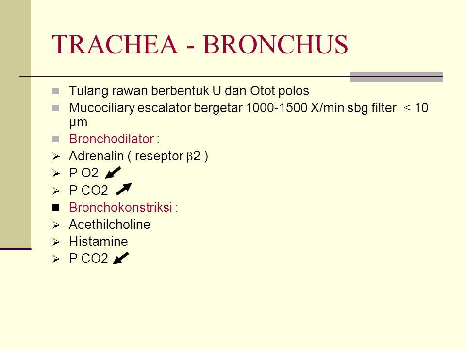 TRACHEA - BRONCHUS Tulang rawan berbentuk U dan Otot polos