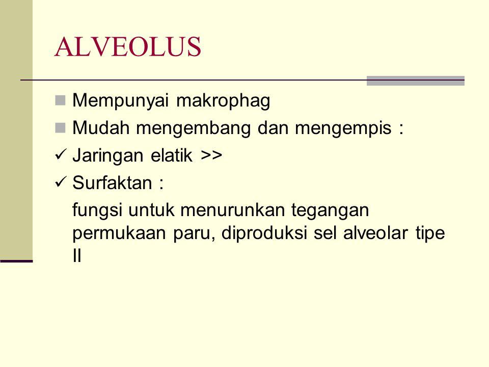 ALVEOLUS Mempunyai makrophag Mudah mengembang dan mengempis :