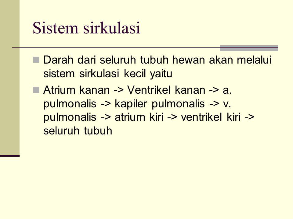 Sistem sirkulasi Darah dari seluruh tubuh hewan akan melalui sistem sirkulasi kecil yaitu.
