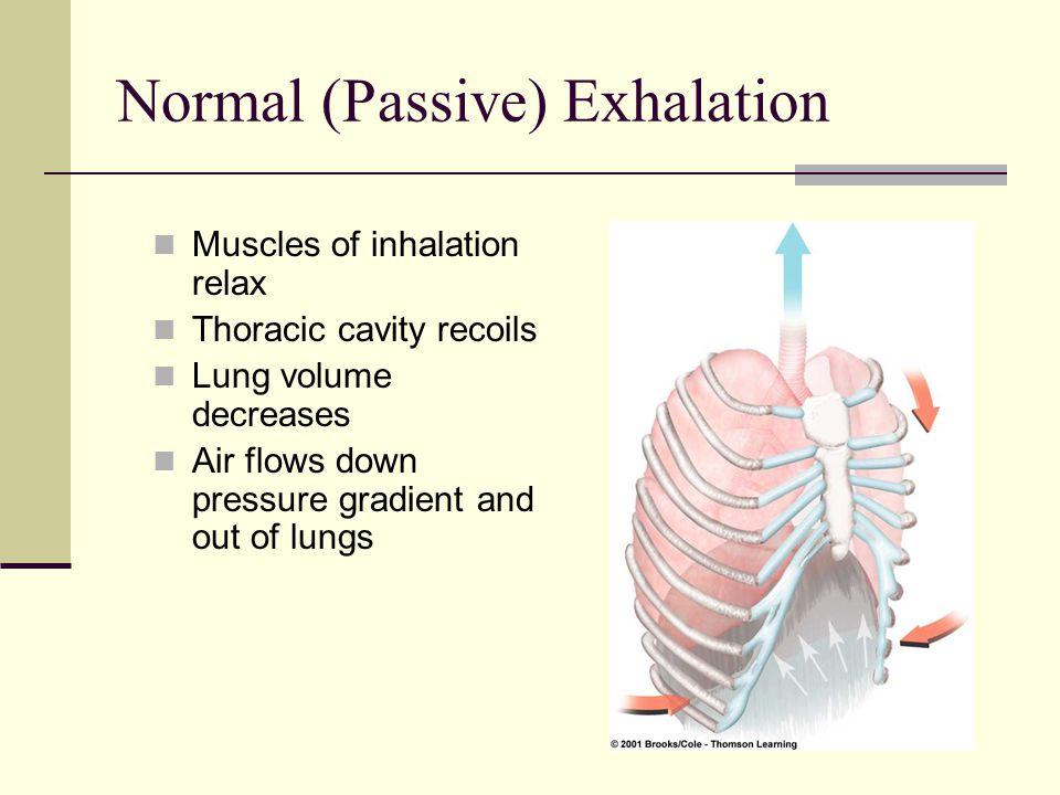 Normal (Passive) Exhalation