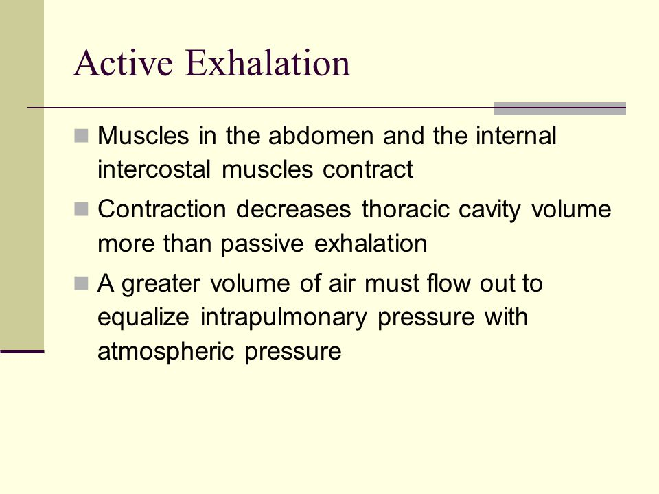 Active Exhalation Muscles in the abdomen and the internal intercostal muscles contract.