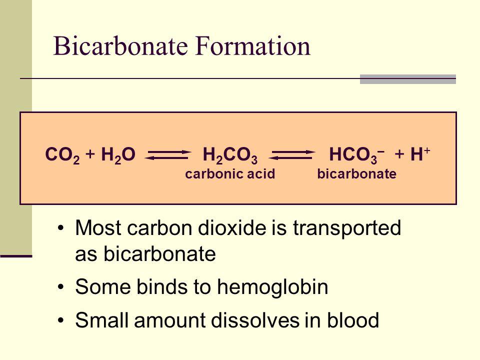 Bicarbonate Formation