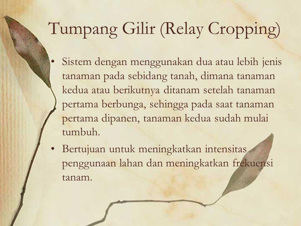 Tumpang Gilir (Relay Cropping)