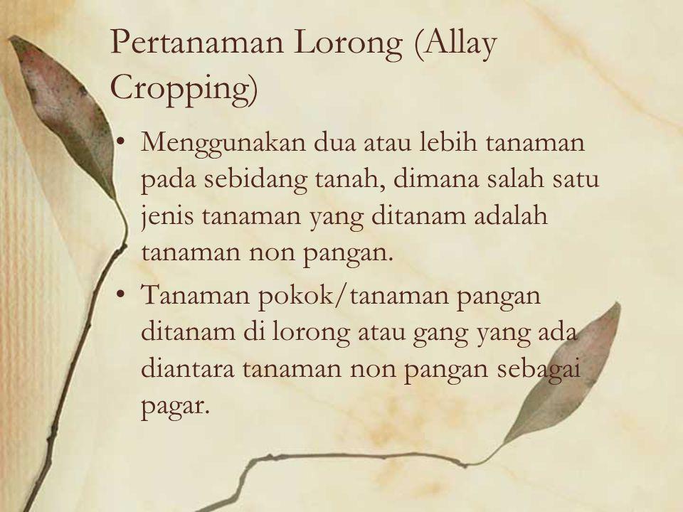 Pertanaman Lorong (Allay Cropping)