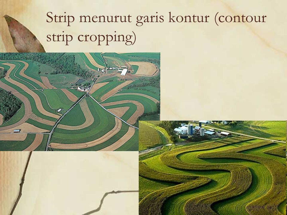 Strip menurut garis kontur (contour strip cropping)