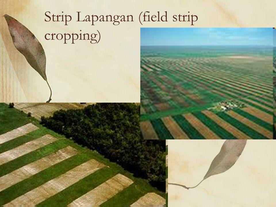 Field strip