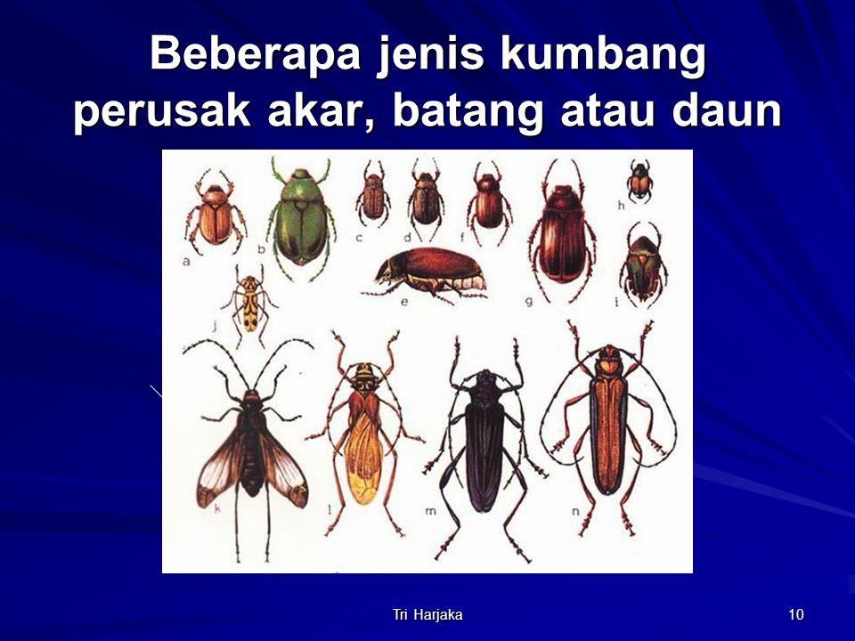 Beberapa jenis kumbang perusak akar, batang atau daun