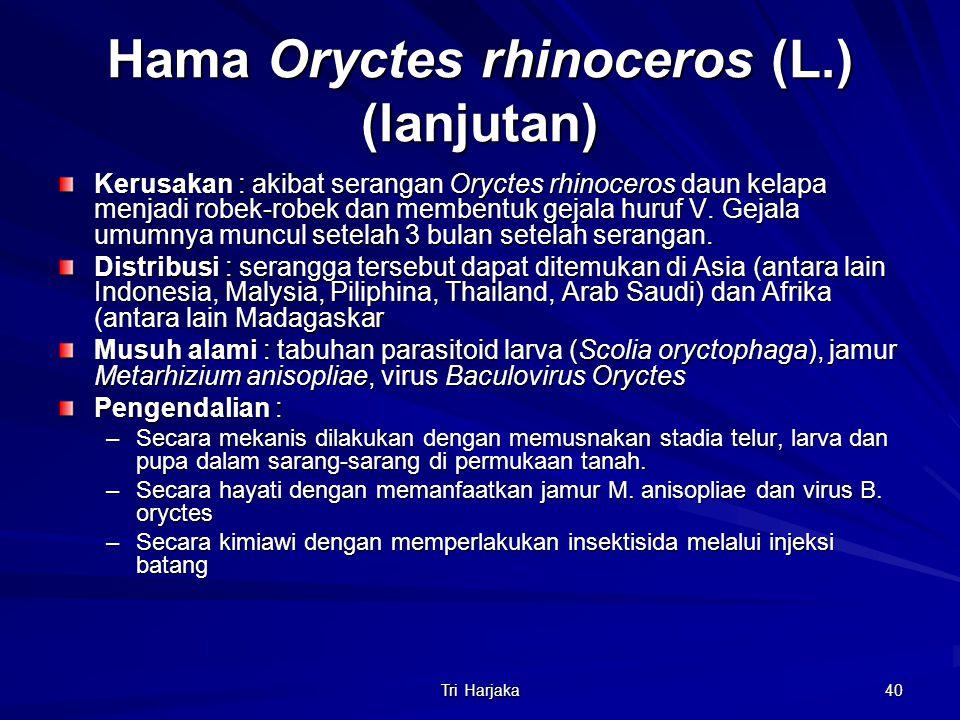 Hama Oryctes rhinoceros (L.) (lanjutan)