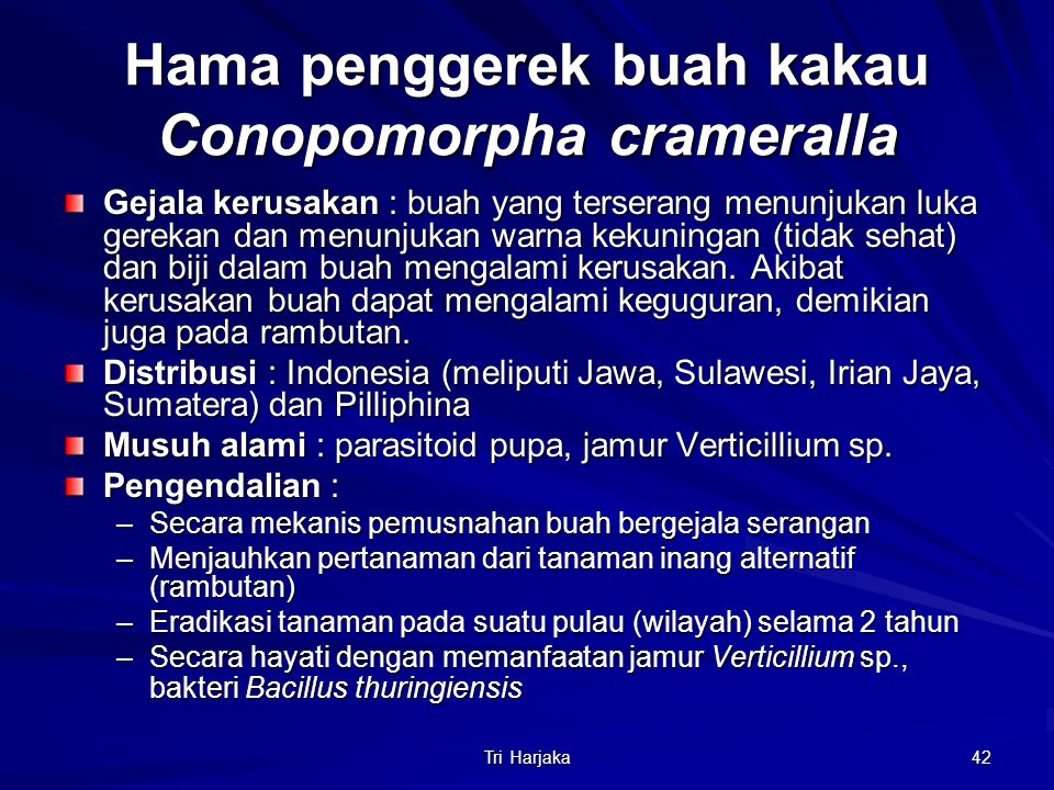 Hama penggerek buah kakau Conopomorpha crameralla