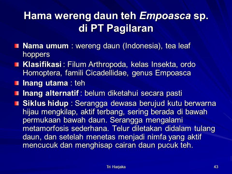Hama wereng daun teh Empoasca sp. di PT Pagilaran