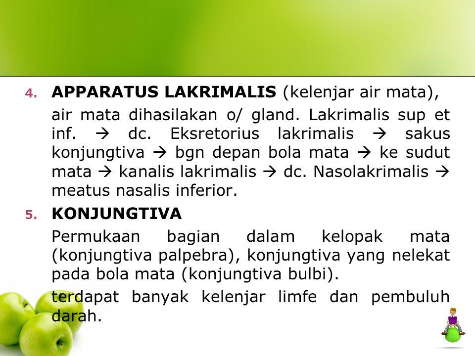 APPARATUS LAKRIMALIS (kelenjar air mata),