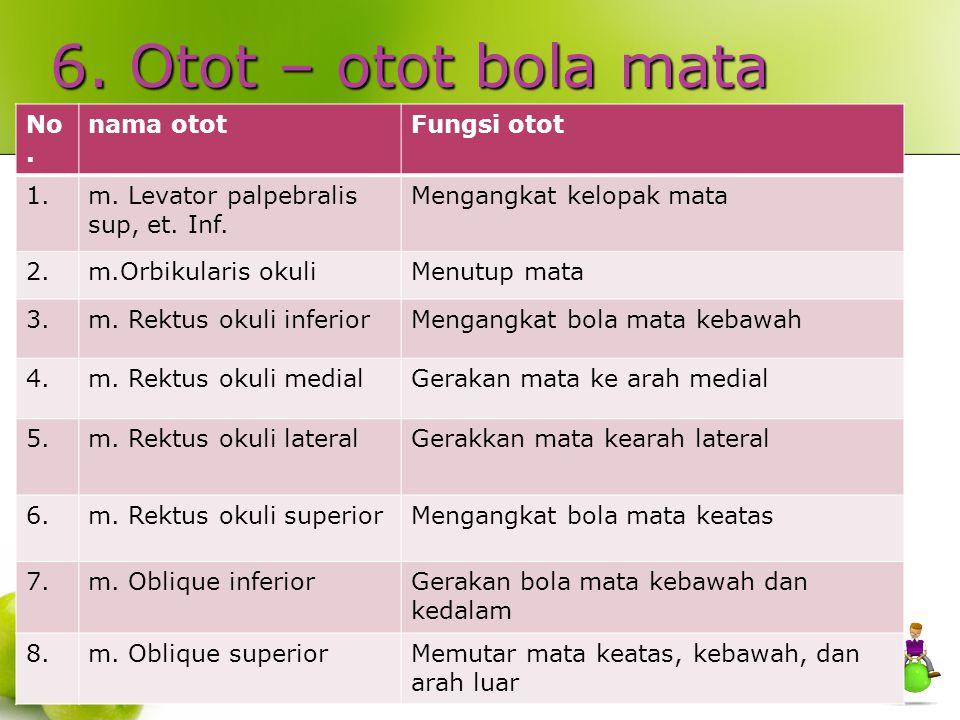 6. Otot – otot bola mata MUSKULI OKULI (OTOT MATA) : No. nama otot