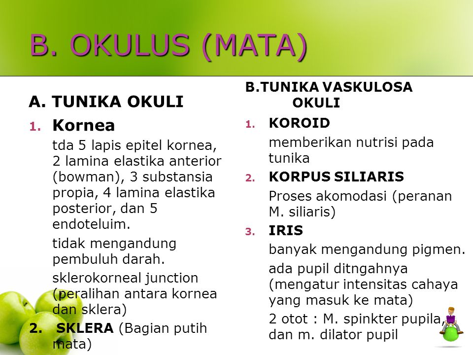 B. OKULUS (MATA) A. TUNIKA OKULI Kornea B.TUNIKA VASKULOSA OKULI