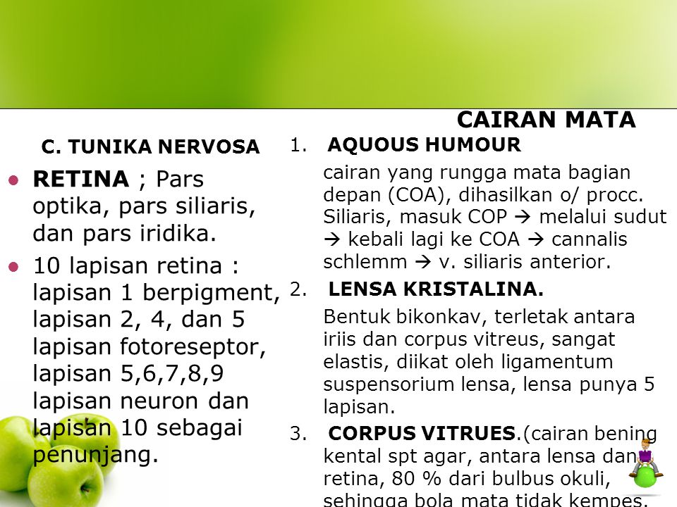 RETINA ; Pars optika, pars siliaris, dan pars iridika.