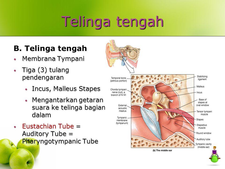 Telinga tengah B. Telinga tengah Membrana Tympani