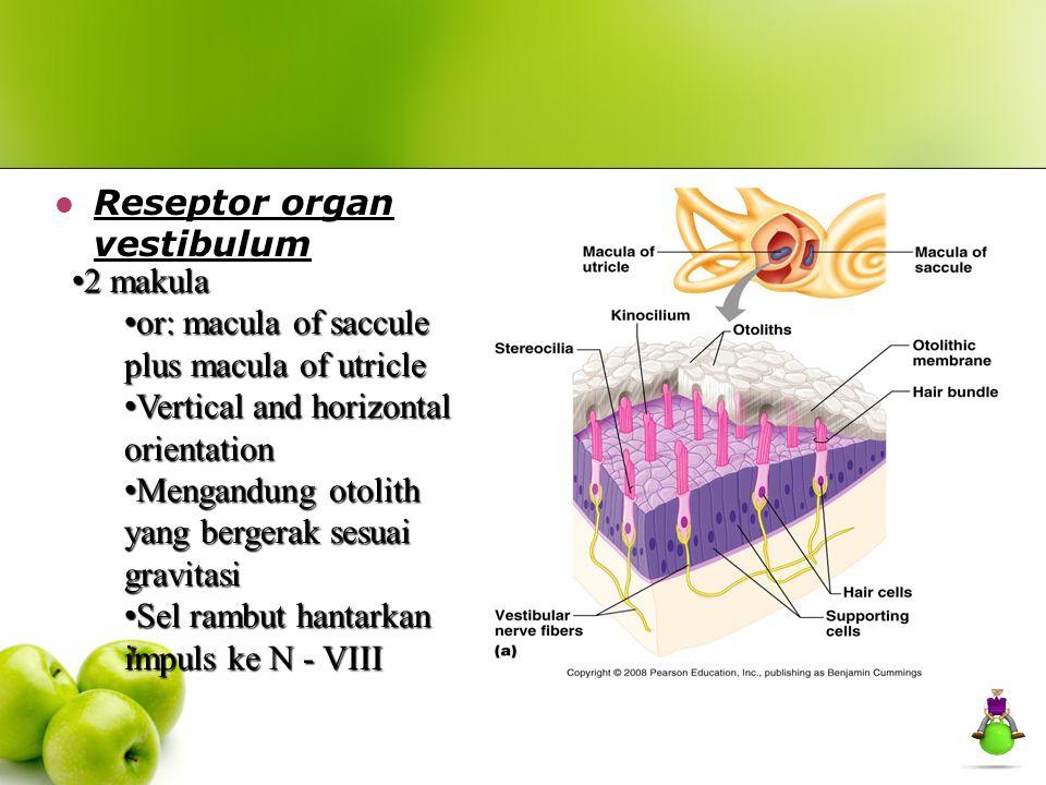Reseptor organ vestibulum