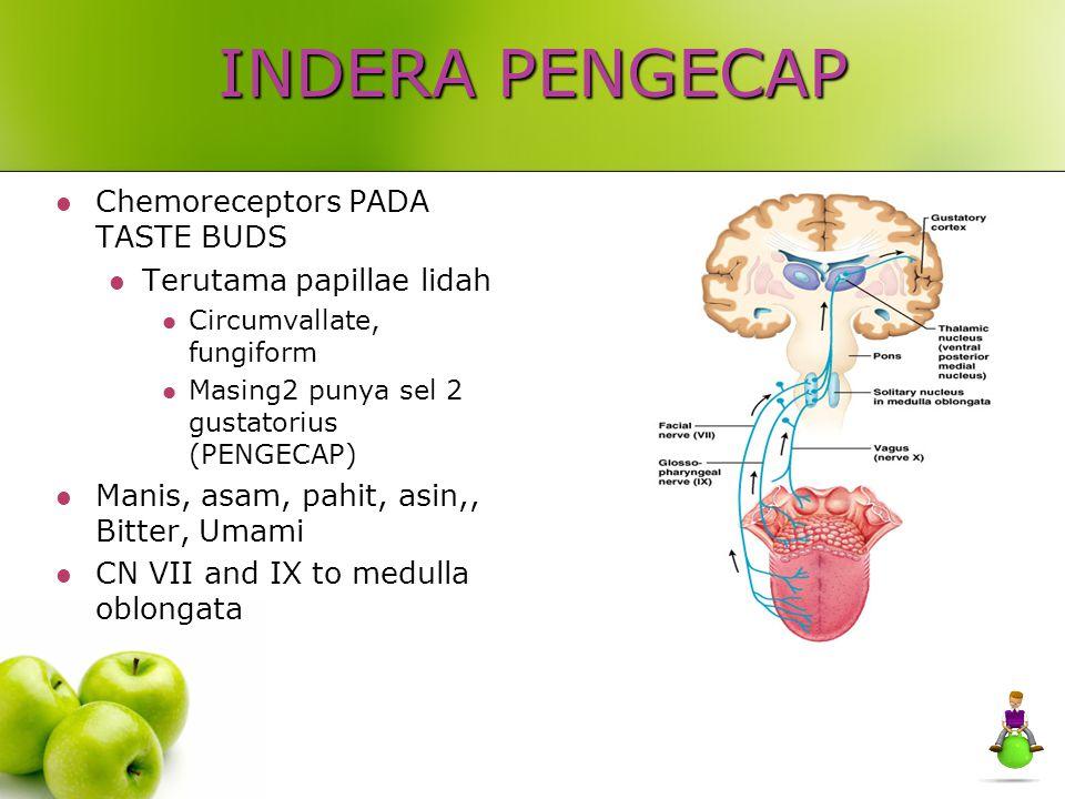 INDERA PENGECAP Chemoreceptors PADA TASTE BUDS Terutama papillae lidah