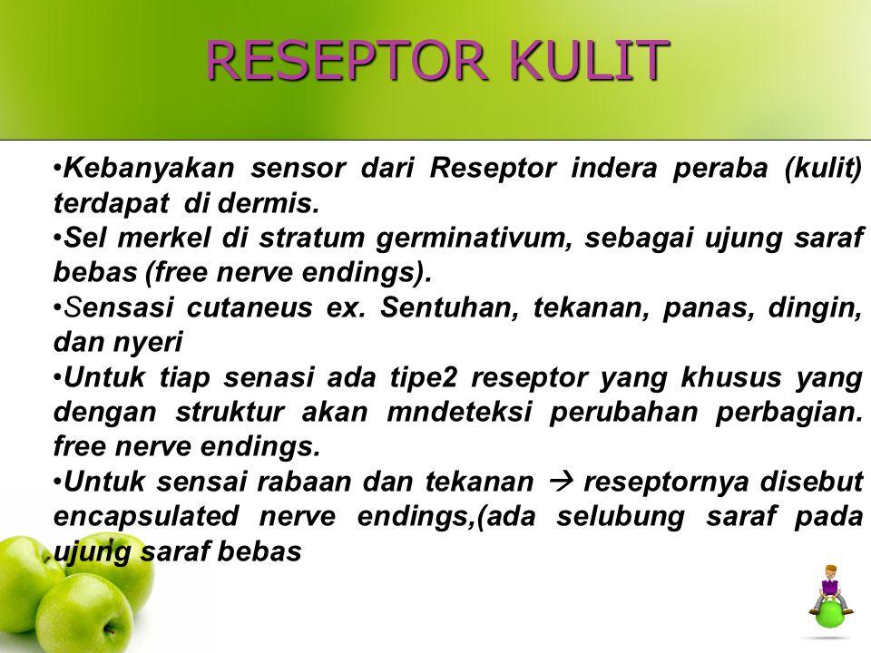 RESEPTOR KULIT Kebanyakan sensor dari Reseptor indera peraba (kulit) terdapat di dermis.