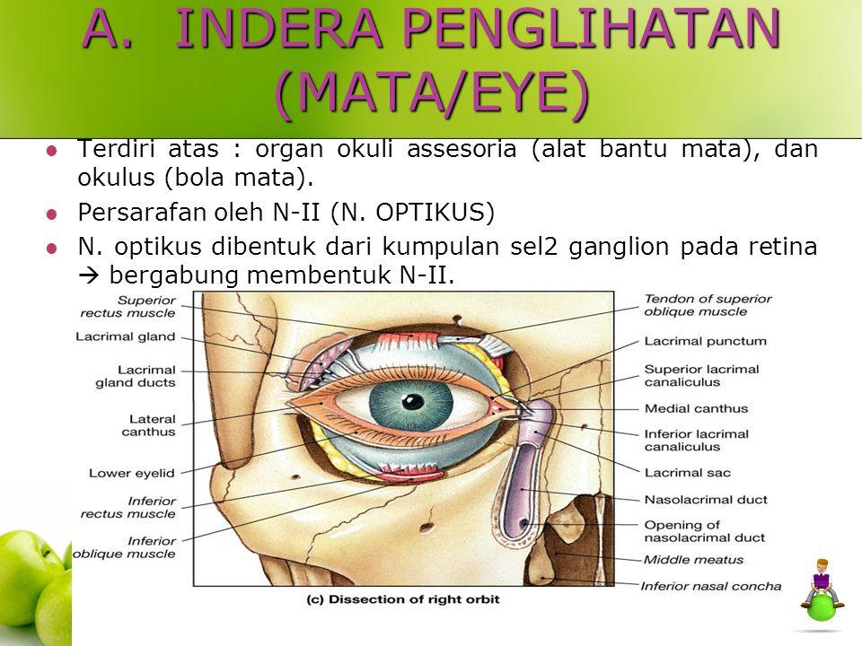 A. INDERA PENGLIHATAN (MATA/EYE)