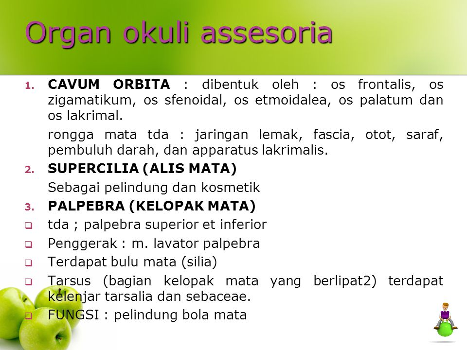 Organ okuli assesoria CAVUM ORBITA : dibentuk oleh : os frontalis, os zigamatikum, os sfenoidal, os etmoidalea, os palatum dan os lakrimal.