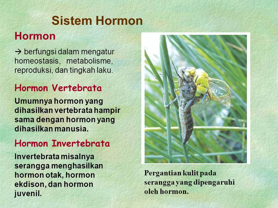 Sistem Hormon Hormon Hormon Vertebrata Hormon Invertebrata