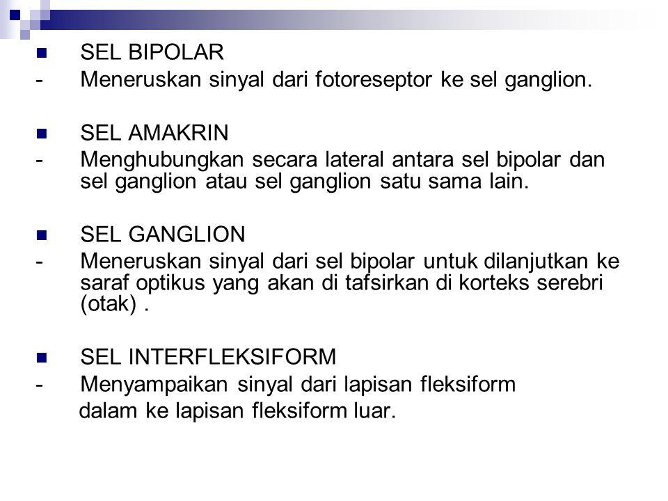 SEL BIPOLAR - Meneruskan sinyal dari fotoreseptor ke sel ganglion. SEL AMAKRIN.